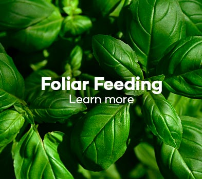 Foliar Feeding